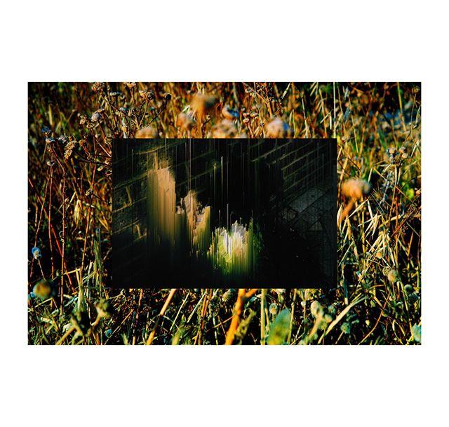 bush (coloured) x plant . . . . . . . . . .  #photography #filmphotography #film #35mm #35mmfilm #art #artphotography #negativefeedback #zineart #photographyzine #zine #glitchart #glitch #digitalart #distorted #glitche #analoguedistortion #distortion #artistsofinstagram #inspiration #artoftheday #gallery #instaart #creative #artwork #artist #art