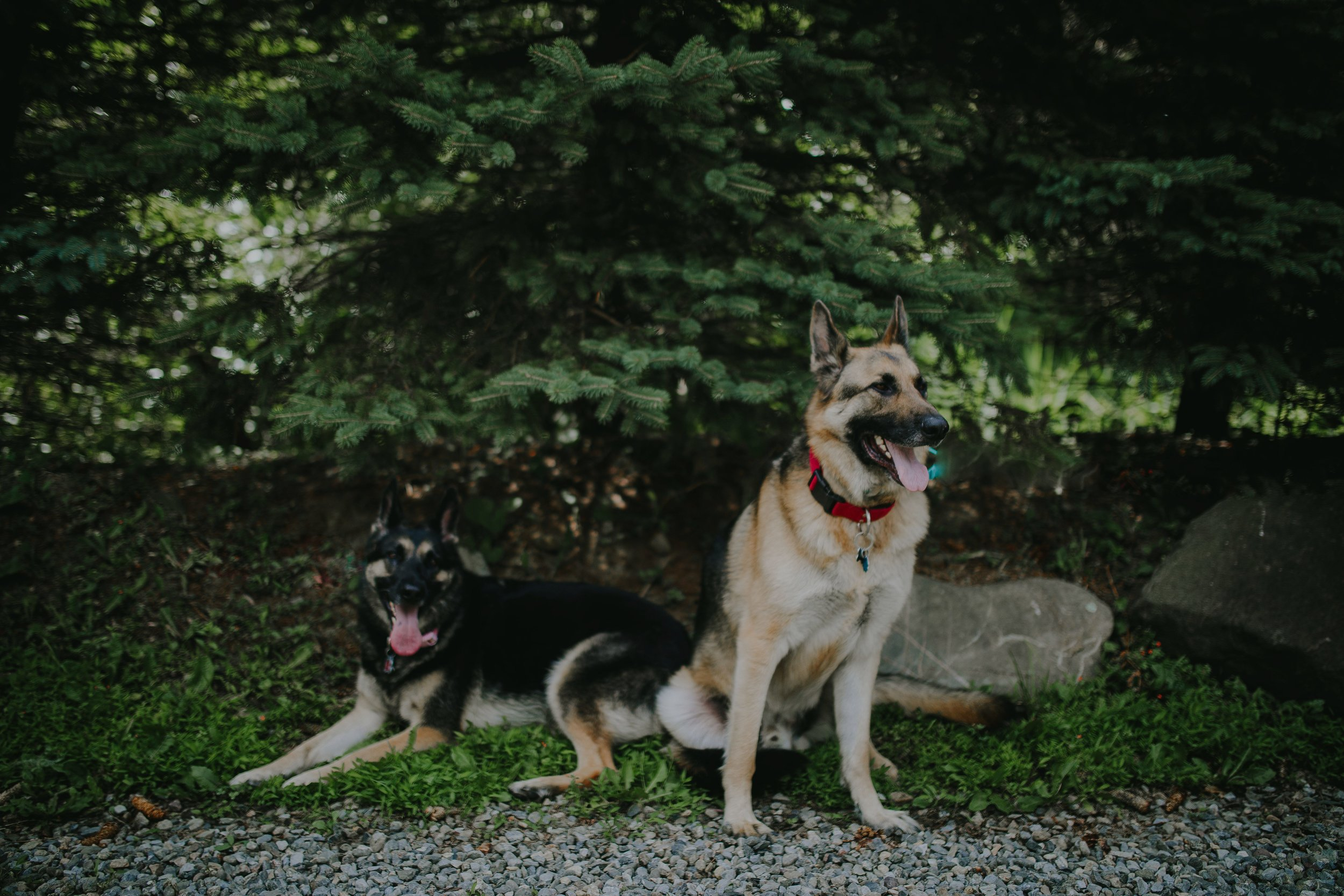 Westchester Ny Dog Boarding Trusted By 10 000 Gracelane Kennels