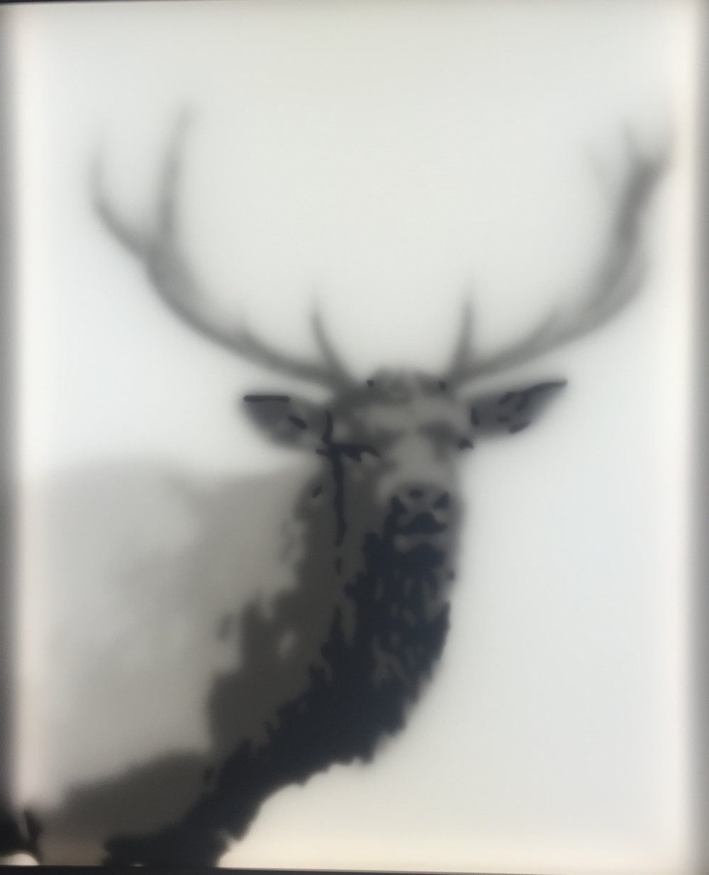 Printed plexiglass artwork of an elk with in black and white.