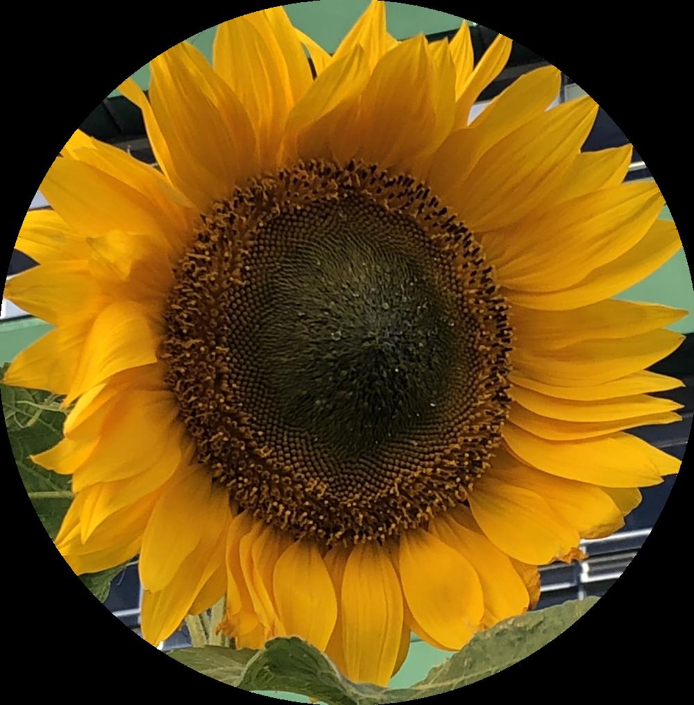 sunflowers massage massage växjö