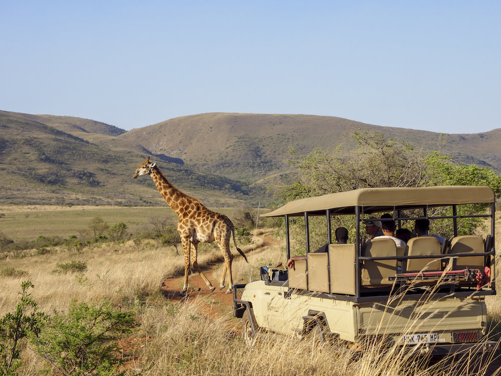 Nkomazi-Private-Game-Reserve_Giraffe-2-1.jpg