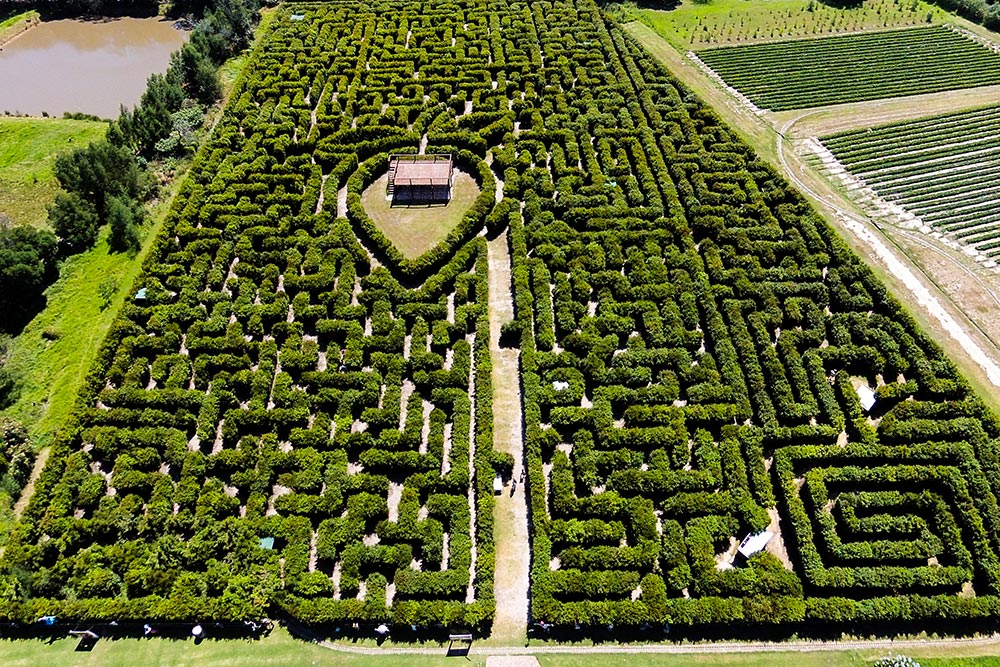 4 Redberry Hedge Maze.jpg