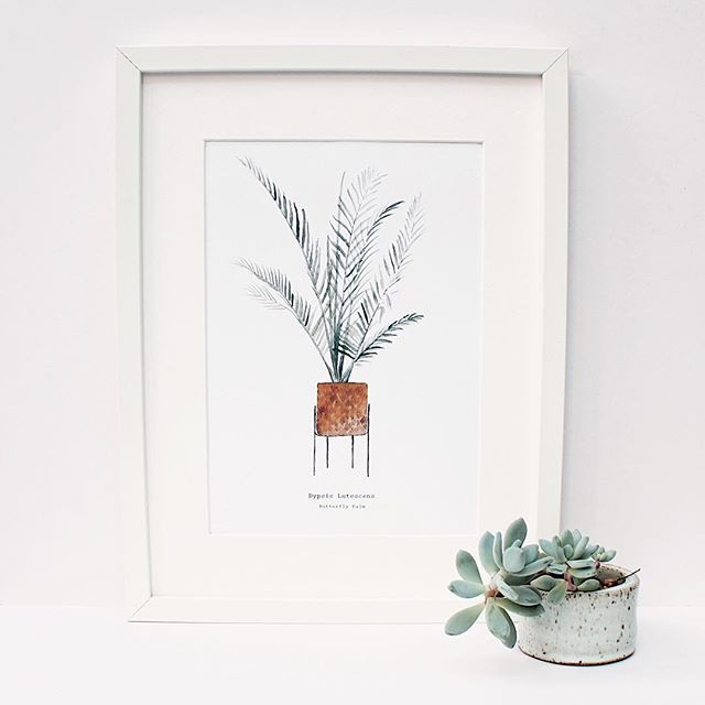 I've added my new prints to my website, including this Butterfly Palm as part of my indoor botanicals series and a Botanical Gardens print. Check out the link in my bio 🌵🌿