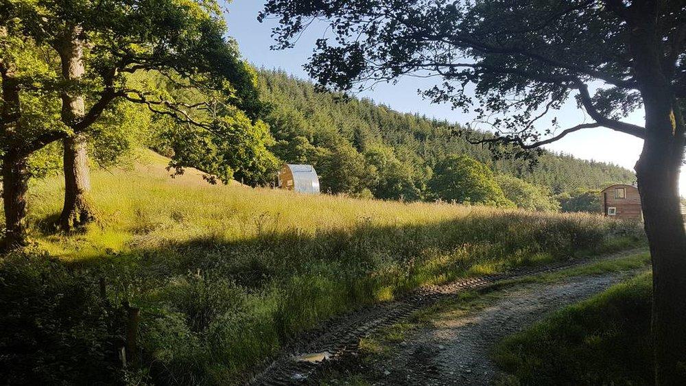 Caban Cadno woodland