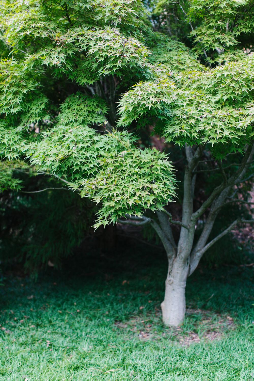 ahp_GG-gardenstory_bench_garden_IMG_4432.jpg