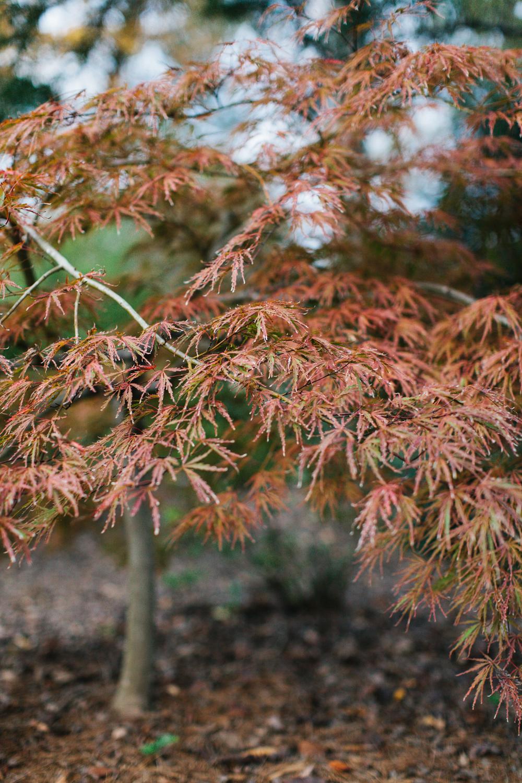ahp_GG-gardenstory_details_IMG_4528.jpg