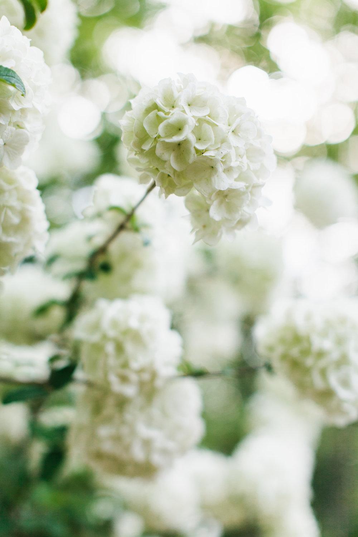 ahp_troyrhone_Garden_3_IMG_7223.jpg