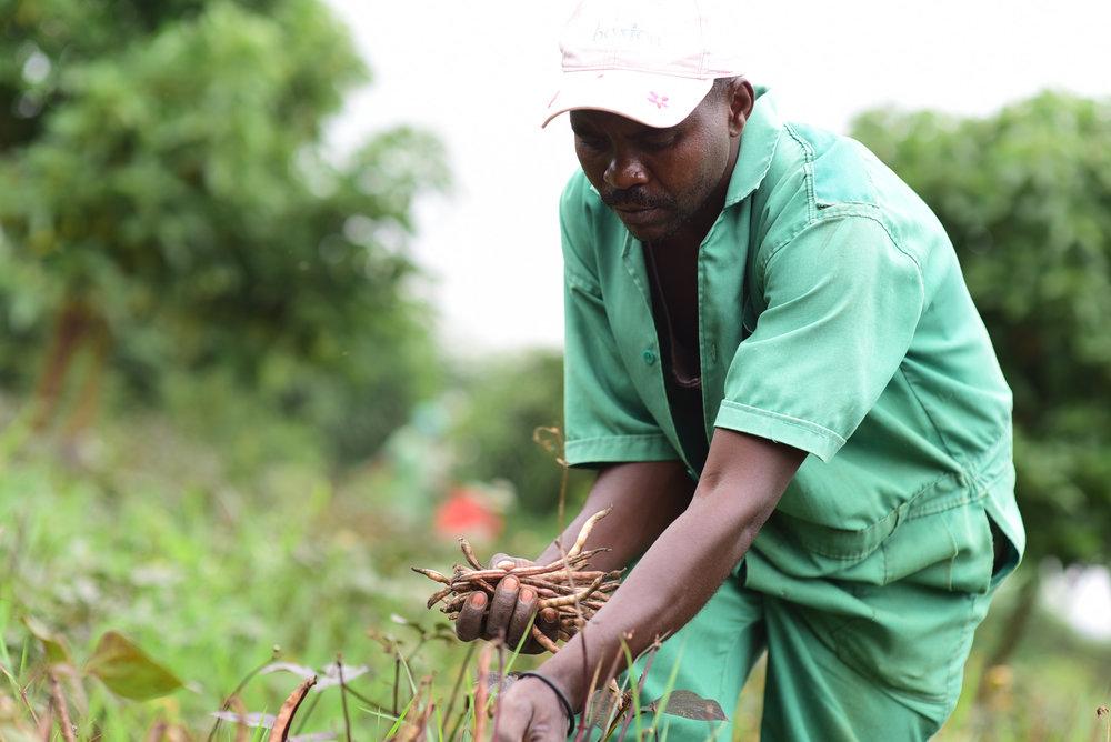 Mperekejabahire Jean Dedieu    Farm Technician /Abakozi wo mumurima