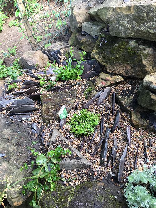 GardenCreviceGarden2.jpg