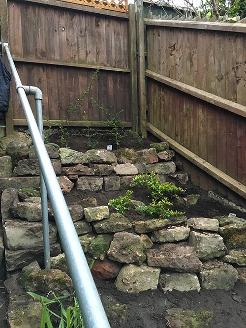 GardenBackProgressFinished.jpg