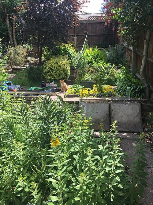 GardenKaitoGaffer.jpg