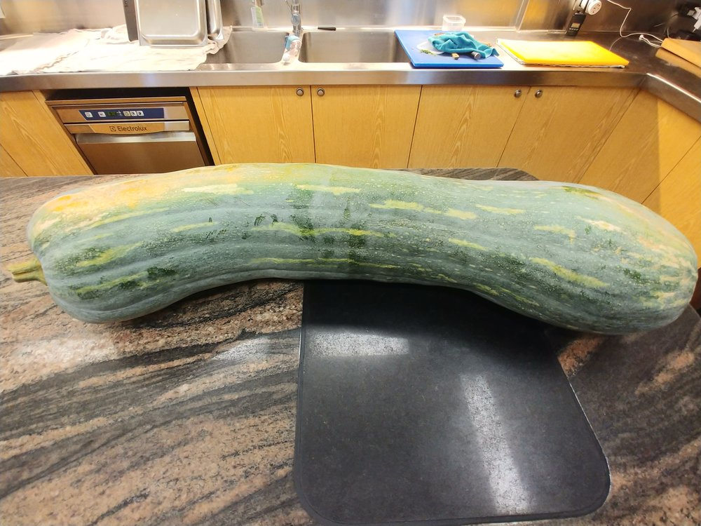 We are talking a big ass vegetable here -