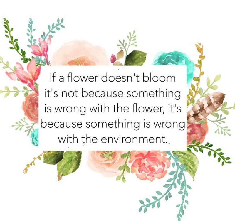 if-flower-doesnt-bloom.jpeg