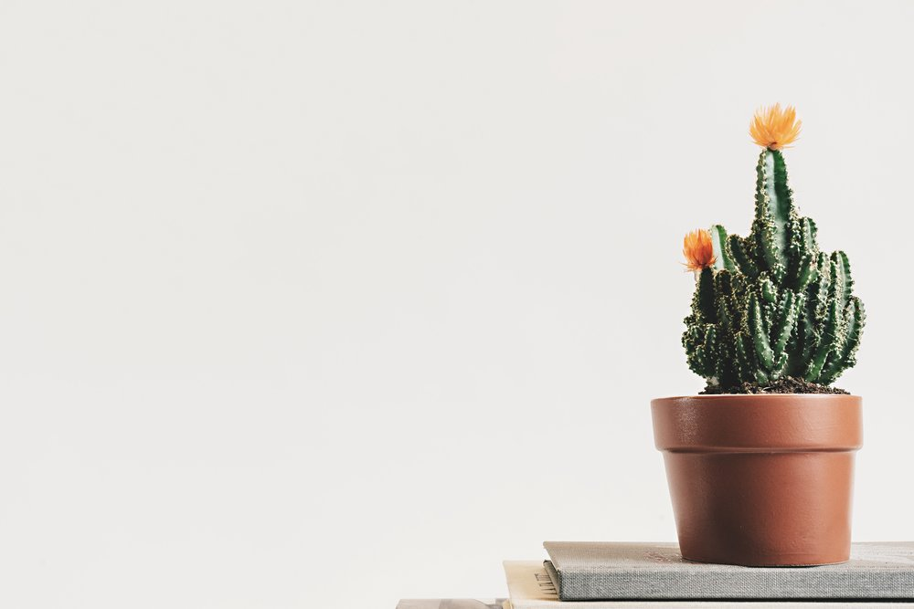 book-botanical-cactus-403571.jpg