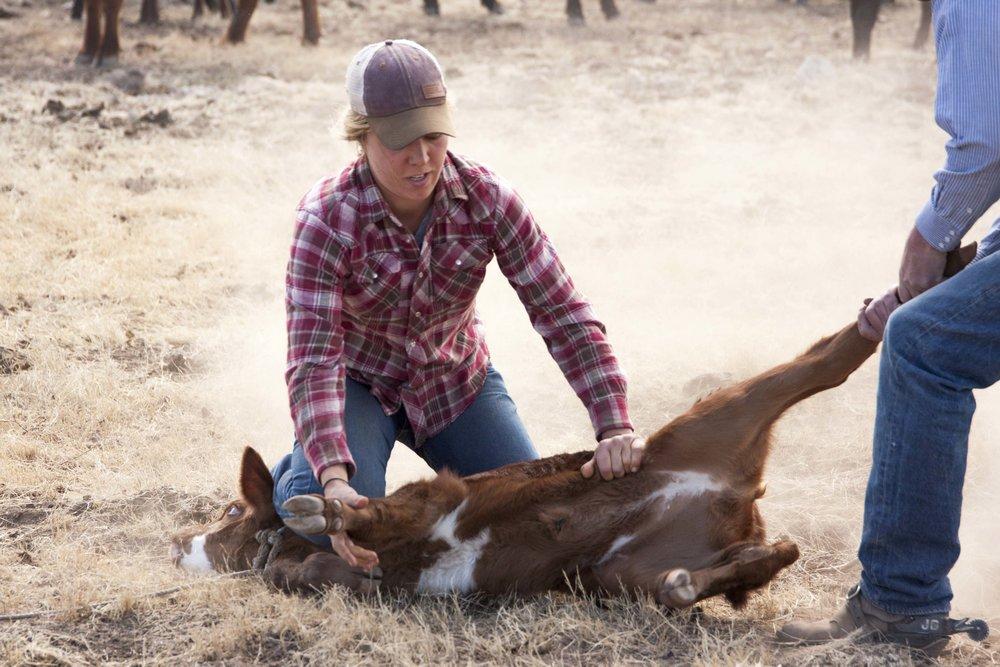 Kate Clyatt, current Quivira apprentice, flanking a calf