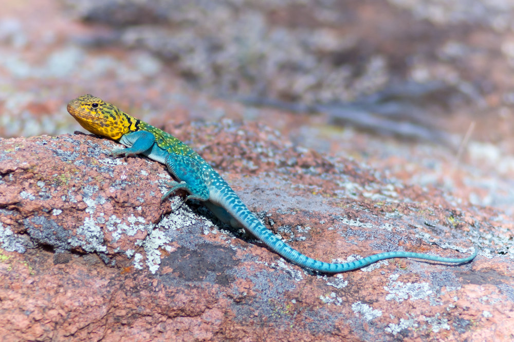 Reptiles & Amphibians -