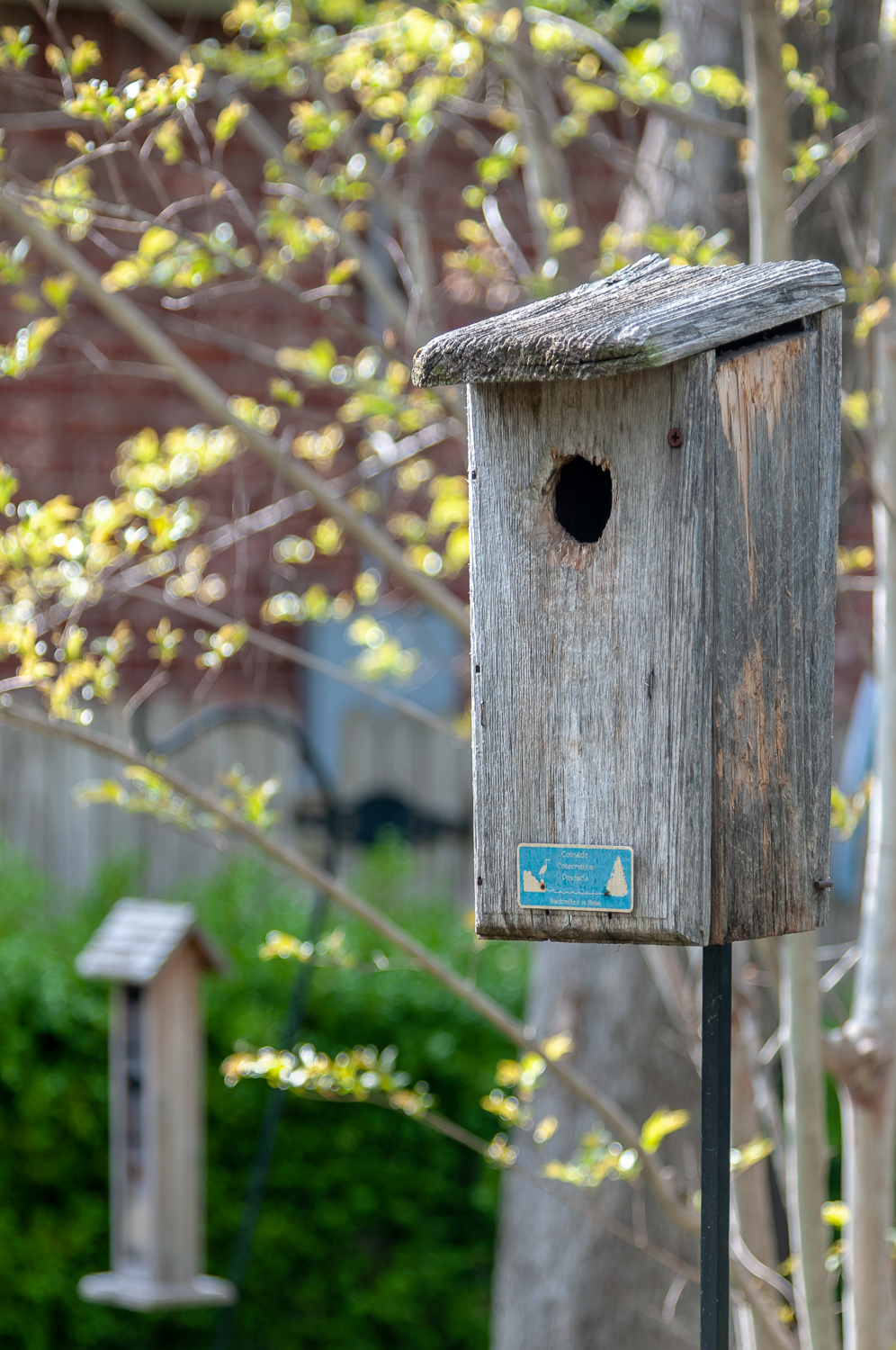 Nest Boxes - We have had this bluebird box for many years – I think that is obvious. Our Eastern Bluebirds have produced 2-3 broods the past two years!