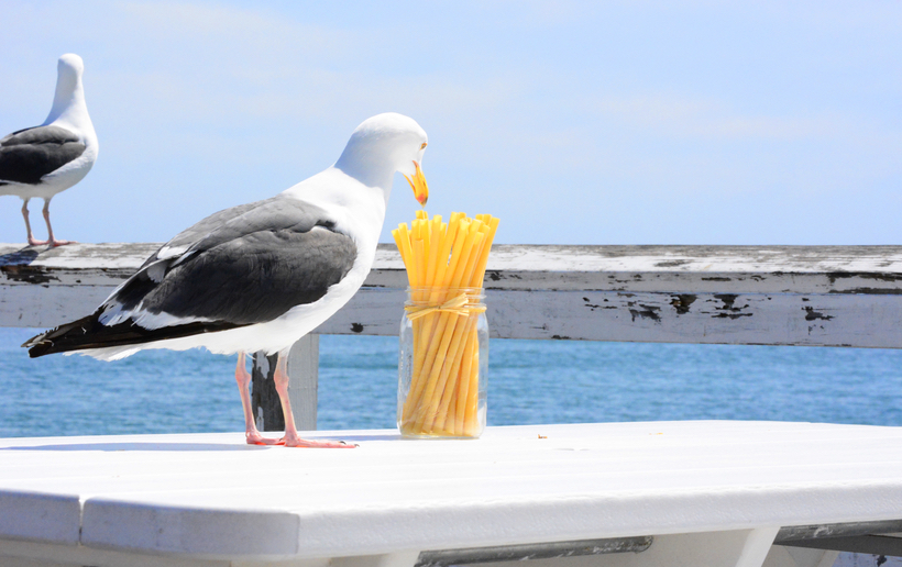 Pasta straws - safe for seagulls.