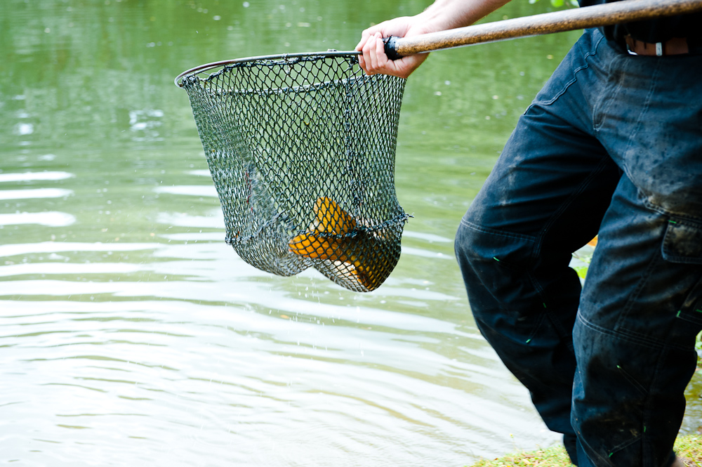 SF Fish Stock -021.jpg