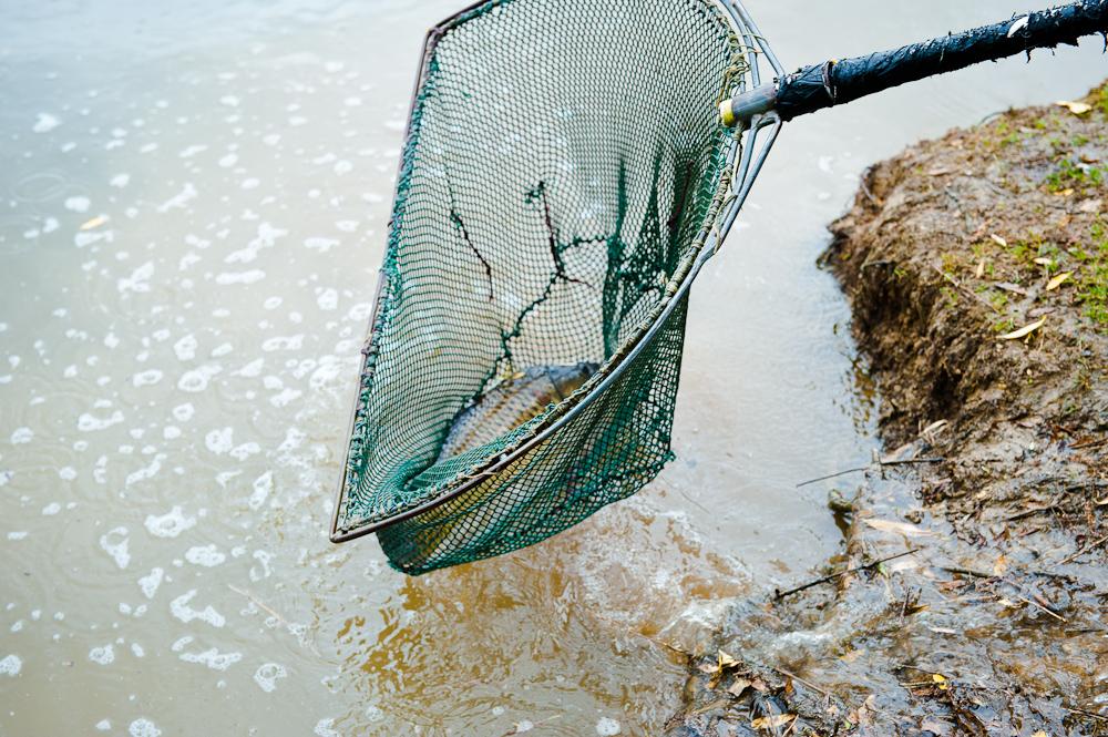 SF Fish Stock -023.jpg