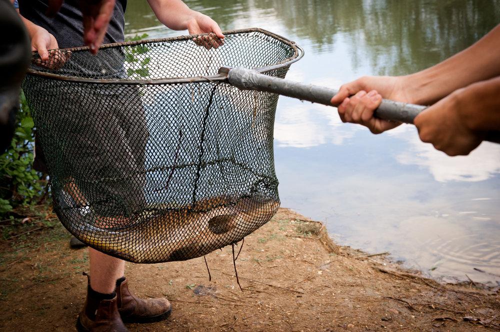 Fish (12).jpg