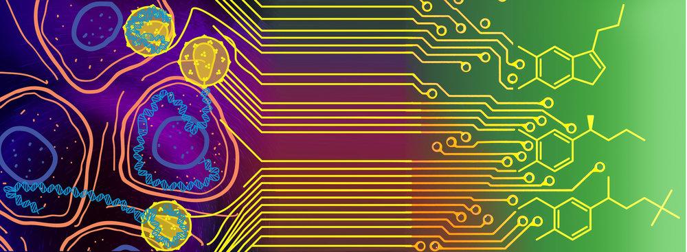 circuit_07 LONG.jpg