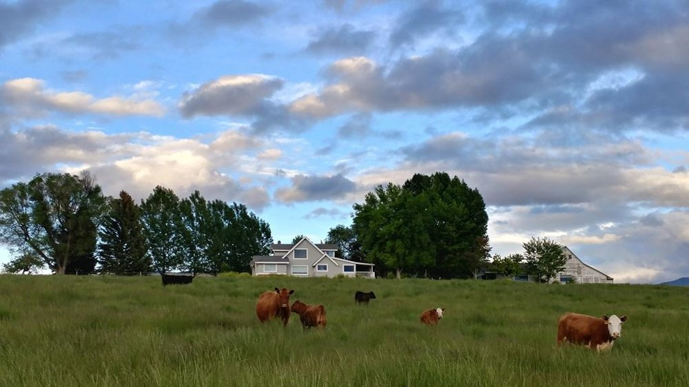 bitterroot-valley-pasture-ranch-cattle-land