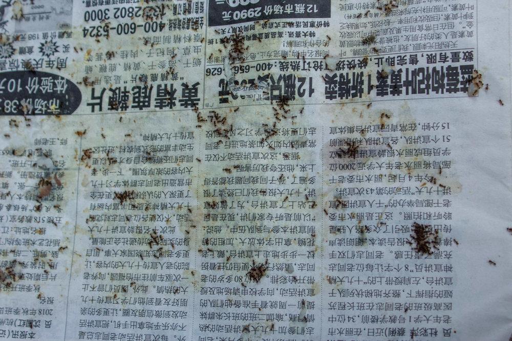 China_-38.jpg