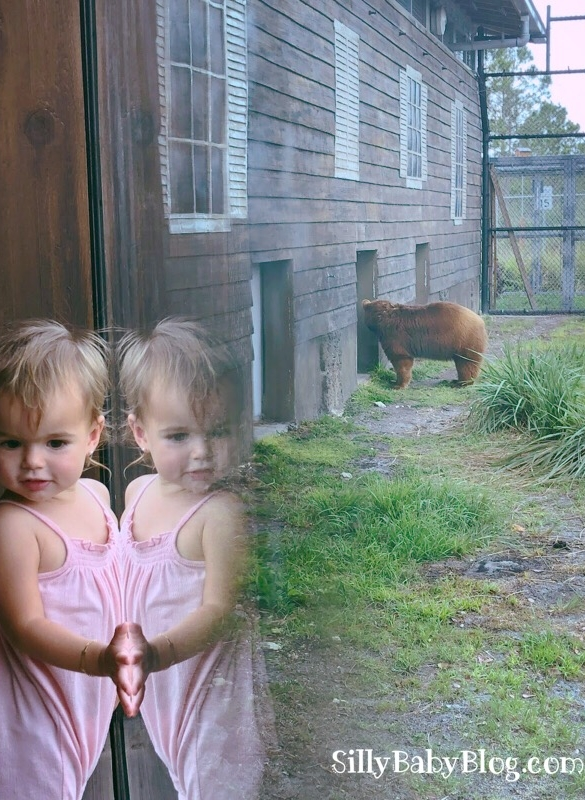 Earth Day at Zoo Miami. Black Bear