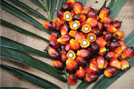 Palm oil is from Palm Fruit