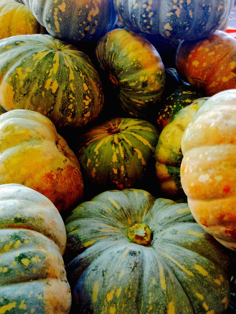 Fuck I love pumpkins