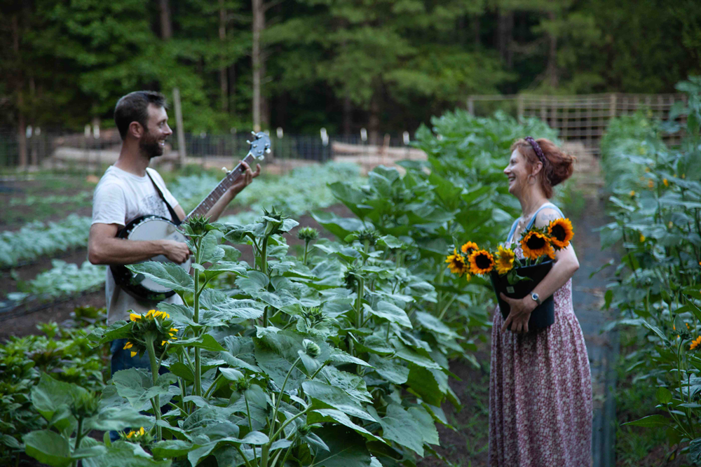 fireside-farm-randall-lisa-field-sunflower-banjo_small2.png