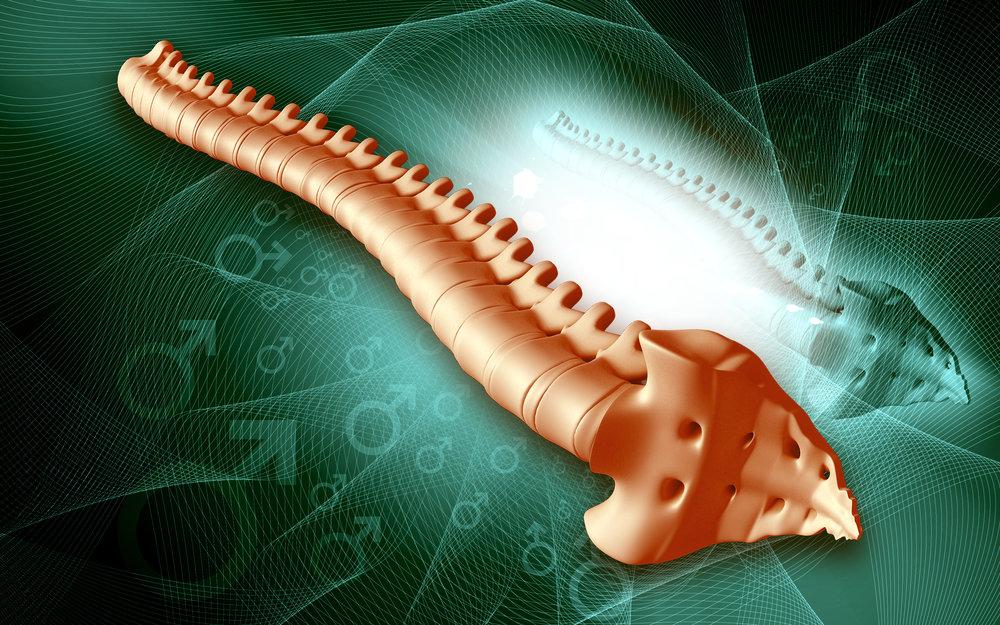 spine .jpg