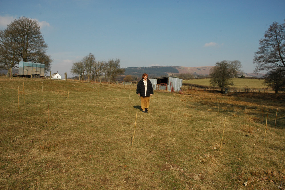 Sue surveys the site.jpg