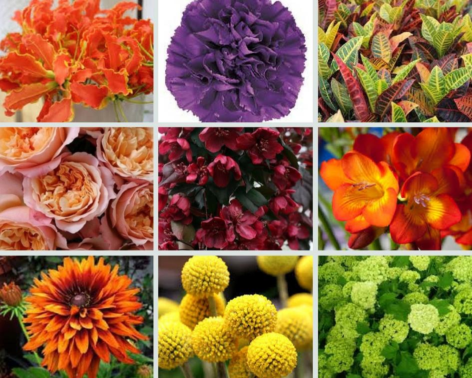 Purple flower inspiration, Paragon floral design