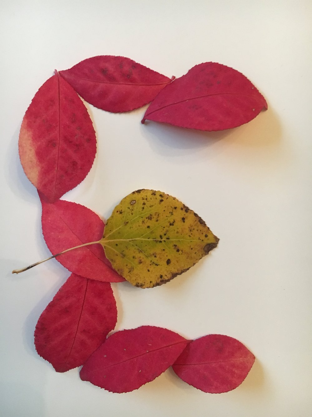 First, we arranged the leaves in the shape of an E. Then, we made a photo model for Sara's collage work.