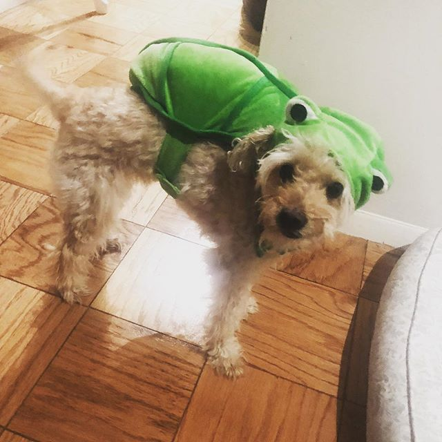 Happy Halloween from my little turtle!!!
