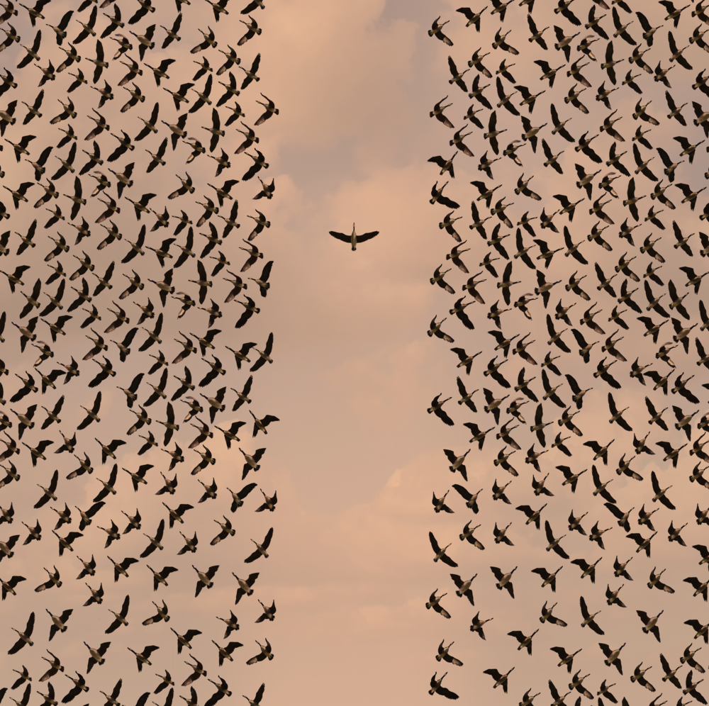Birds-Cover.png