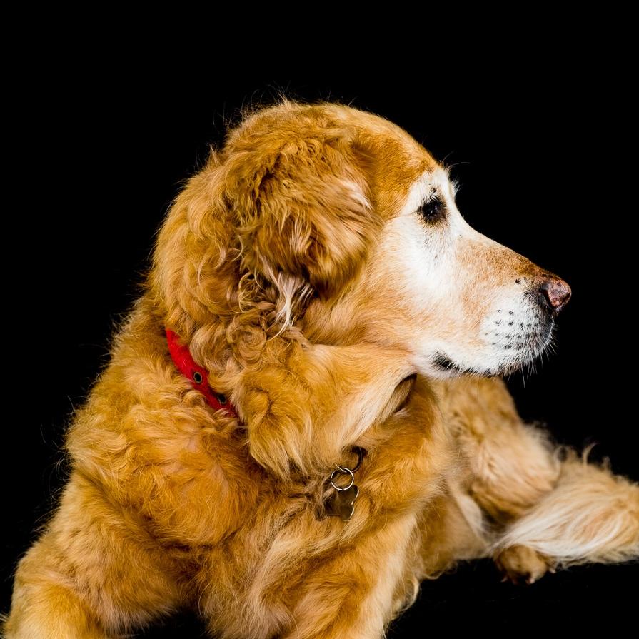 Senior dog photography package