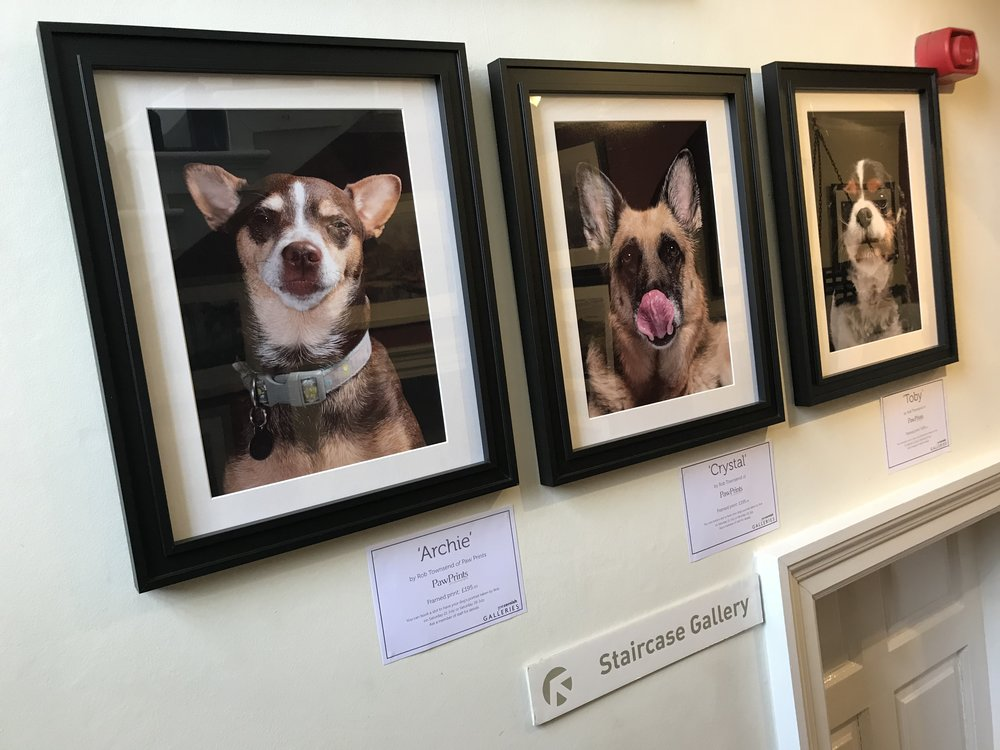 Part of the Paw Prints dog portrait display at Joe Cornish Gallery, July 2018