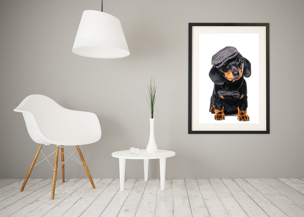 Contemporary room set with framed wall art of Miniature Dachshund dog photography