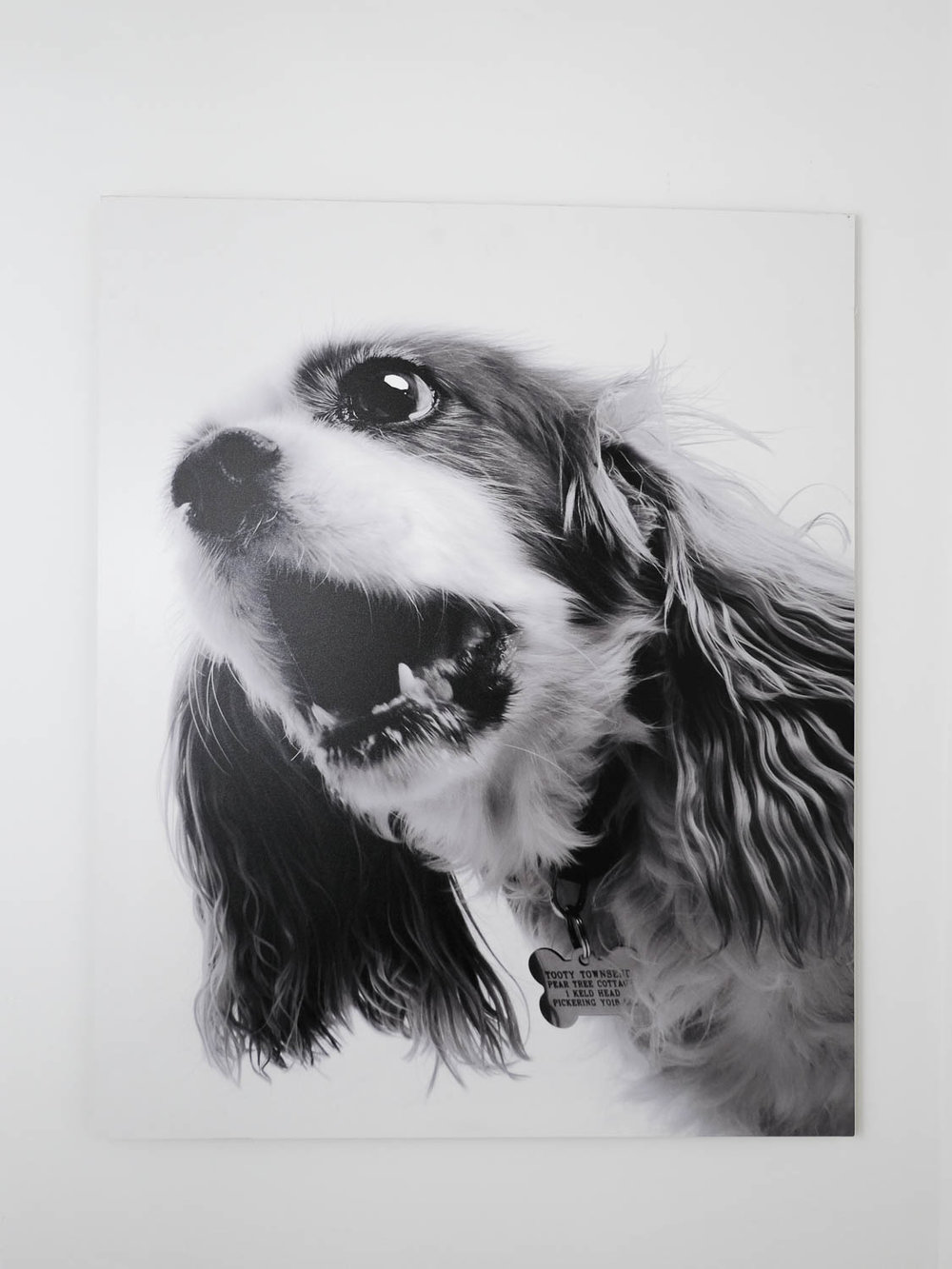 Cavalier King Charles large black and white print.jpg