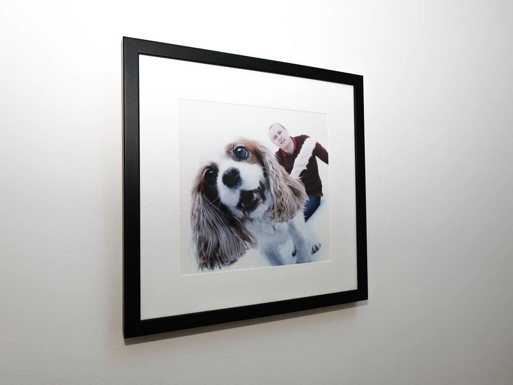Cavalier King Charles square framed print 1.jpg