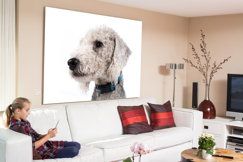 Contemporary room set with large wall art of Bedlington Terrier dog photo