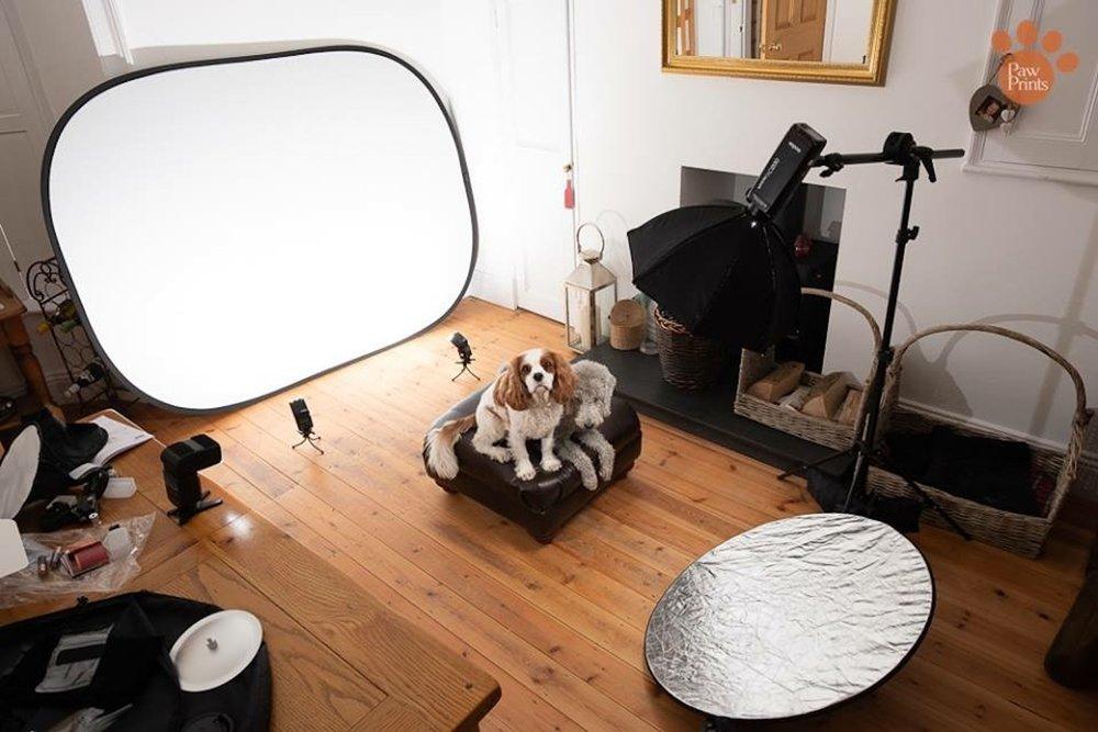 Pet photography photoshoot