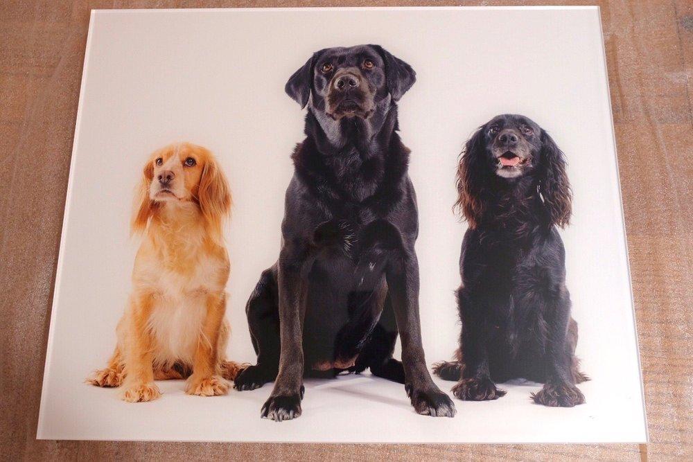 Three dogs pet photography