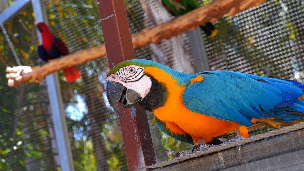 01_Canguros Jardin Papagayo 2016 45 seg-.00_03_41_09.Imagen fija064.jpg