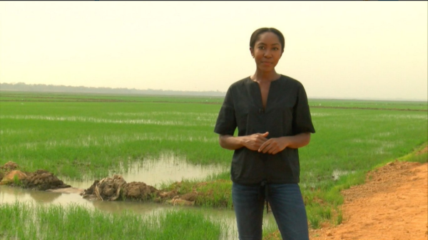 Ijeoma Ndukwe on assignment reporting about rice paddies in Nigeria.