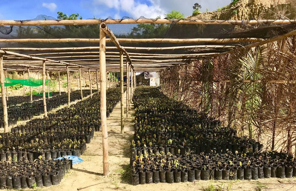 The Cacao Project is currently utilizing approximately 3 hectares of land for the model farm and training centre alone. P (1).jpg