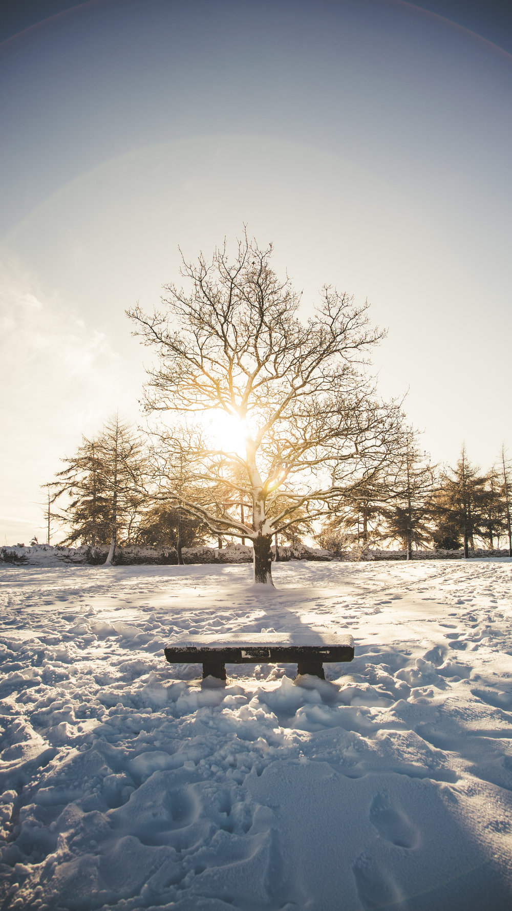 Leckhampton Hill snow-5.jpg
